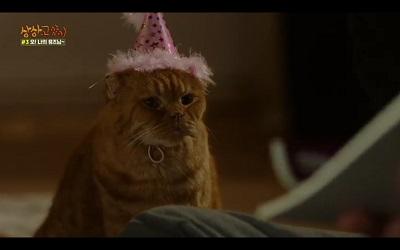 Imaginary Cat Korean Drama - Bok Gil